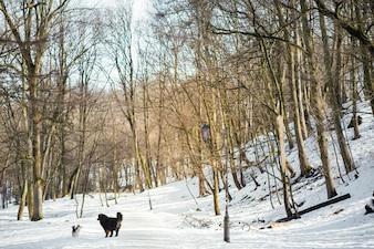 Bernese Mountain dog e Welsh Corgi jogar em um parque de inverno