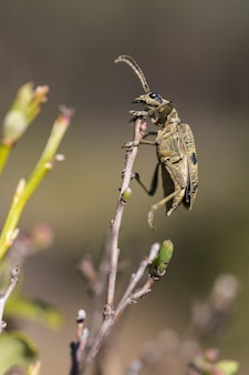 Besouro com antenas sentado em galho de árvore