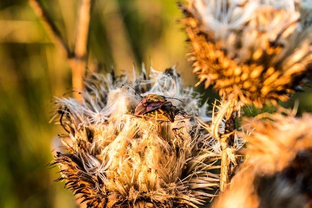 Besouros e flores secas