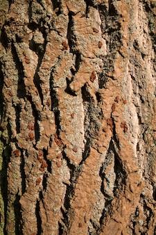 Besouros pretos vermelhos rastejando na casca Foto Premium