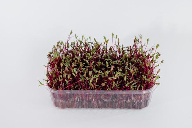 Beterraba micro-verde brota close-up em um branco em uma panela com solo.