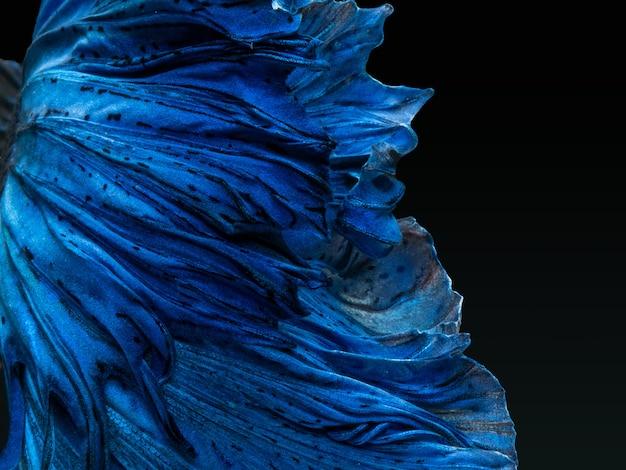 Betta peixe-lutador-siamês, super azul brilhante meia-lua longa cauda
