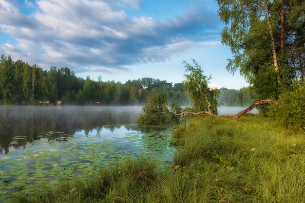 Bétula curva em uma bela manhã de nevoeiro amanhecer em um lago da floresta com nenúfares no verão