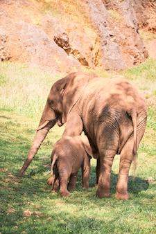 Bezerro de elefante com sua mãe em um prado verde.