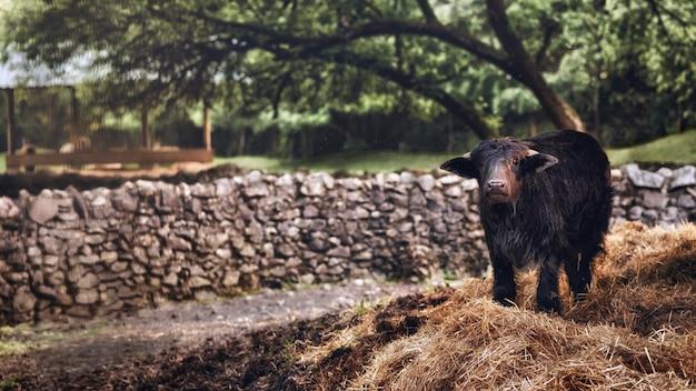 Bezerro desfrutando de um prado em seu ambiente natural.
