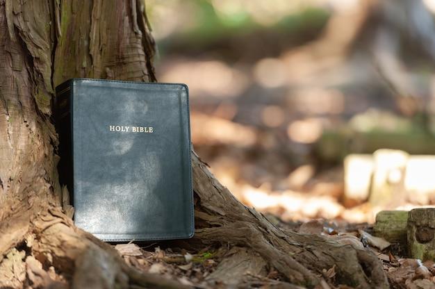 Bíblia sagrada ao ar livre no tronco da árvore e na luz solar. fundo desfocado. copie o espaço. tiro horizontal.