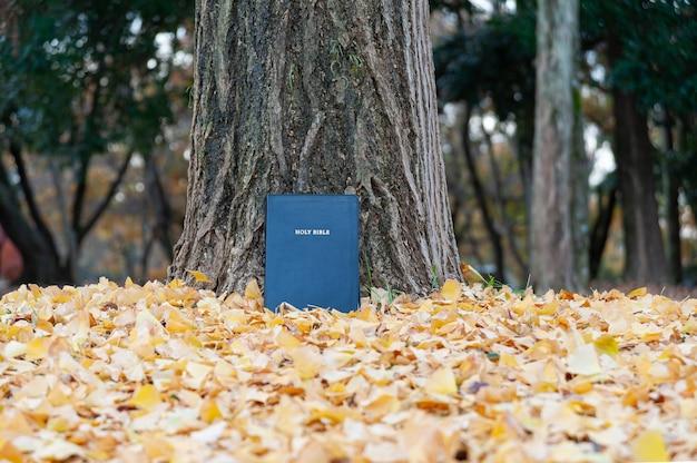 Bíblia sagrada em tronco de árvore ao ar livre no outono com folhas amarelas caídas copie o espaço