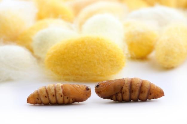 Bicho-da-seda do casulo muitos amarelo do sem-fim de seda