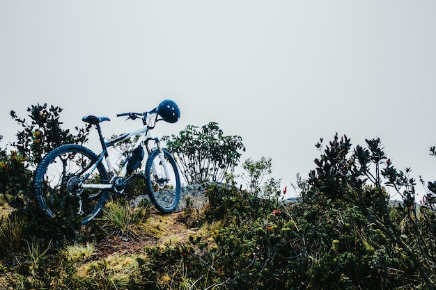 Bicicleta com capacete estacionada perto das plantas verdes