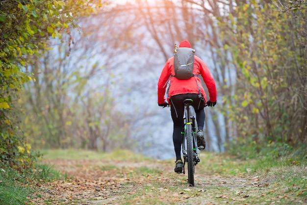 Bicicleta de montanha na rua na floresta