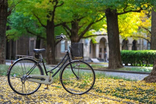 Bicicleta estacionada no parque, entre os campos da árvore de ginkgo