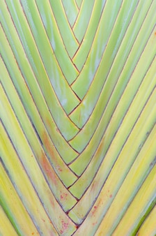 Big palm folding branches closeup abstrata