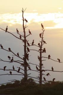 Biguás pássaros, céu