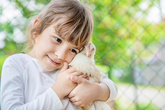 Bio galinhas em uma exploração agrícola home as crianças.