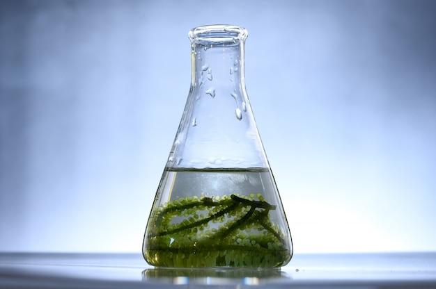 Biocombustível de algas em laboratório de biotecnologia, pesquisa de combustível de algas fotobiorreatores em laboratórios industriais de biocombustíveis