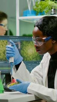 Biólogo cientista pesquisador mulher africana levando solução genética de tubo de ensaio com micropipeta colocando em placa de petri analisando gmo de mudas trabalhando em laboratório biológico.
