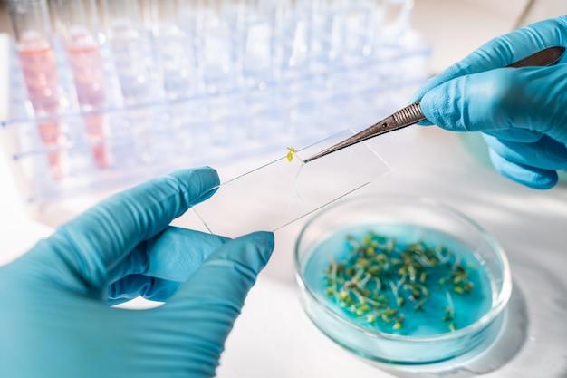 Biólogo examinando sementes. pesquisa agrícola e genética