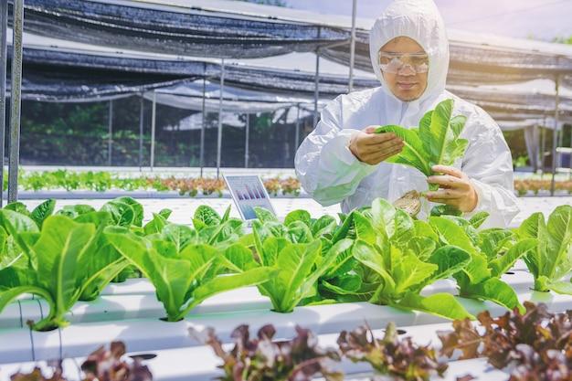 Biólogo, proprietário fazenda de hortaliças hidroponia na estufa verificar a qualidade de vegetabl