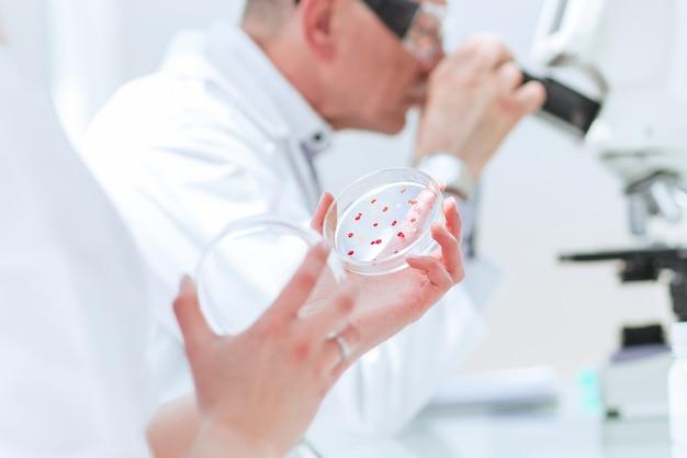 Biólogos pesquisam bactérias em uma placa de petri