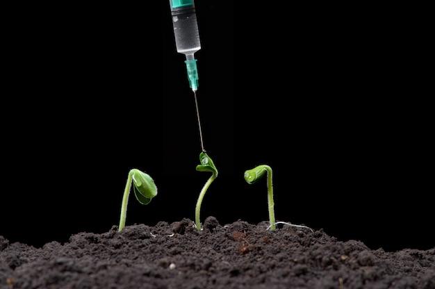 Biotecnologia, adicione um líquido às plantas com uma seringa, fundo escuro