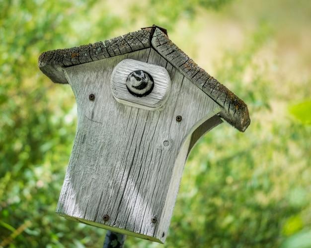 Bird in birdhouse