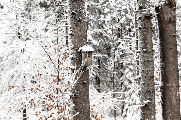 Birdhouse em árvore nevada