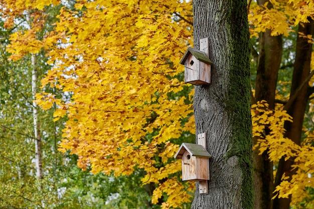 Birdhouses em uma árvore em um fundo de bordo amarelo