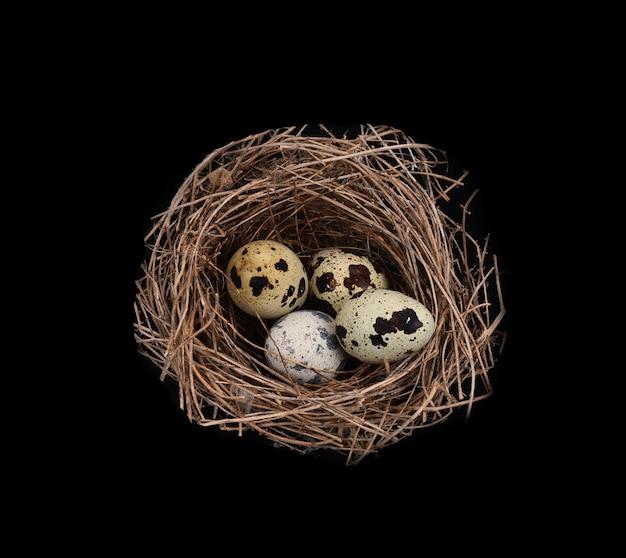Birds nest em preto