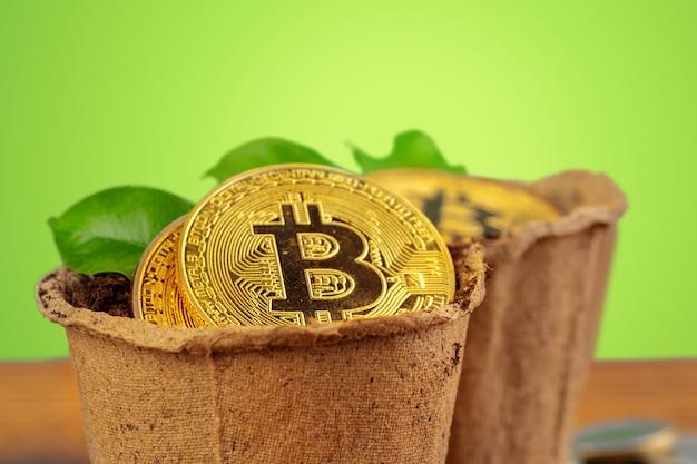 Bitcoin dourado e planta verde no solo