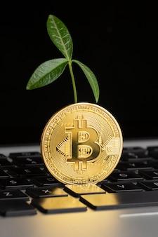 Bitcoin em cima do teclado com planta