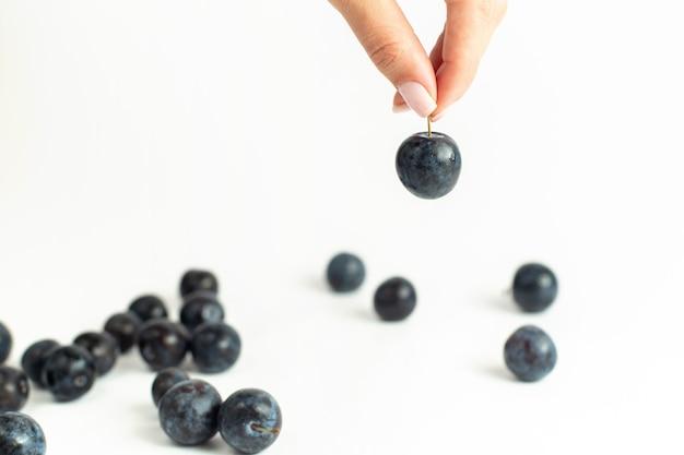 Blackthorns frescos frutas ácidas e escuras no fundo branco frutas frescas suco de verão vinho