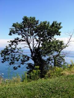 Blefes milwaukee, árvores