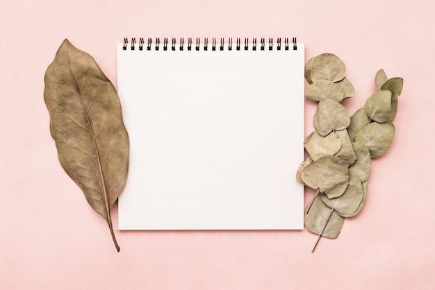 Bloco de notas bloco de desenho em fundo rosa com galho de eucalipto e folha de ficus