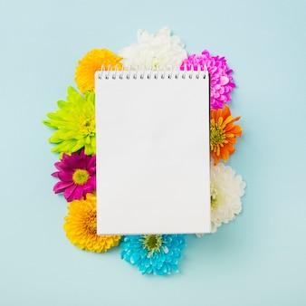 Bloco de notas em espiral sobre as flores de crisântemo coloridos sobre fundo azul