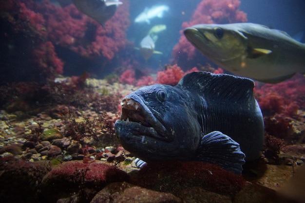 Blue toothy monster, vivendo no fundo do mar