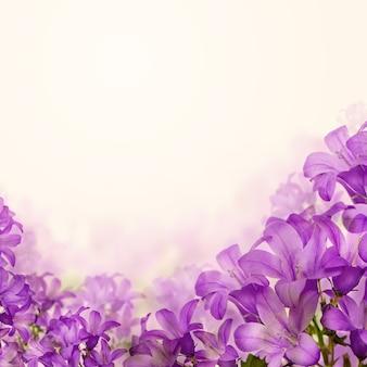 Bluebell de flores em fundo floral e copyspace branco para texto