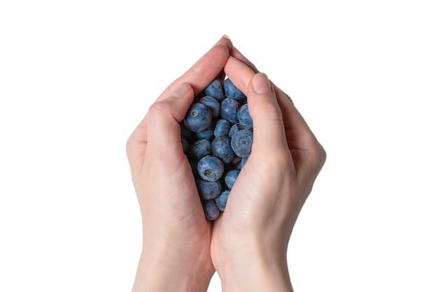 Bluepberry mantido nas mãos da mulher, isoladas no fundo branco. vista do topo.