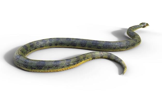 Boa constrictor, a serpente venenosa maior do mundo