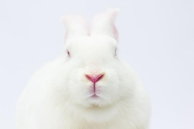 Boca e nariz de coelho, macro abstrata