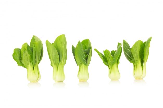 Bok choy vegetal isolado no fundo branco