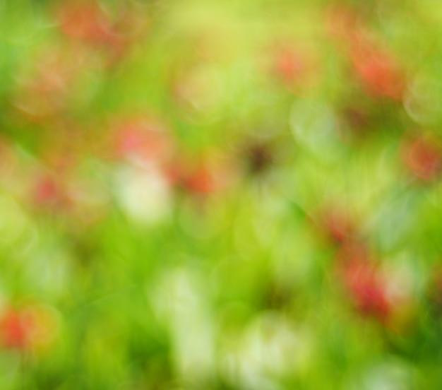 Boke de fundo abstrato Foto Premium