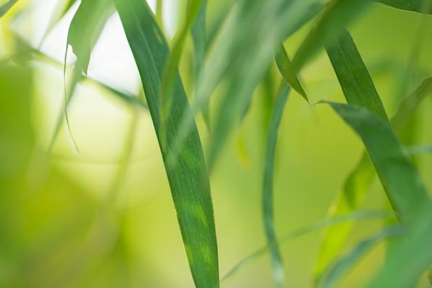 Bokeh das folhas da árvore para o fundo da natureza