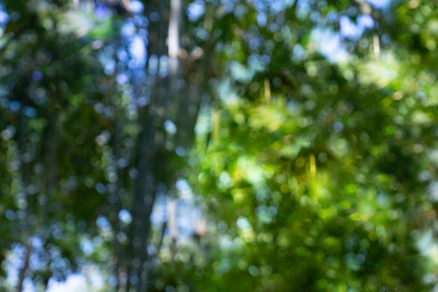 Bokeh de floresta de bambu de desfocagem