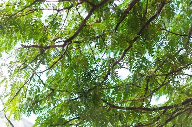 Bokeh de natureza verde e desfocar o fundo de textura abstrata de ramo de folha