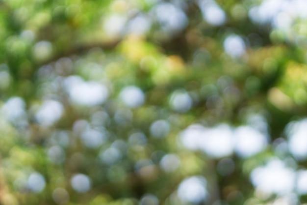 Bokeh de verão verde e azul para o fundo