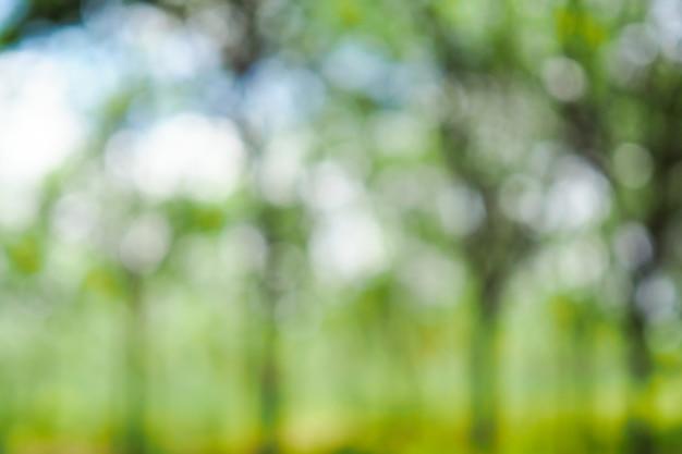 Bokeh verde abstrato fora de foco da árvore na natureza