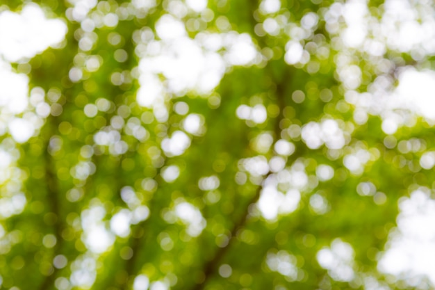 Bokeh verde claro de uso de árvore para plano de fundo