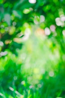 Bokeh verde fora da folha do foco.