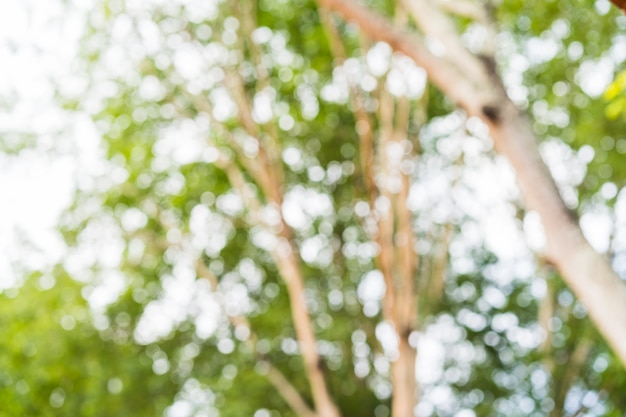 Bokeh verde na natureza abstrata borrão bokeh de fundo verde da árvore