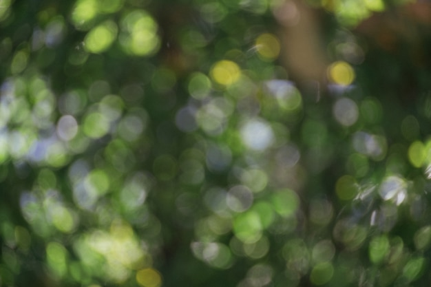 Bokeh verde natural abstrato da cena da árvore